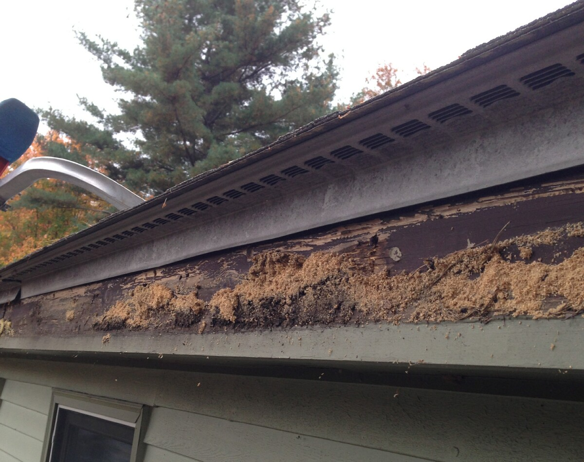 Blog Alo Seamless Gutters The Rain Control Authority